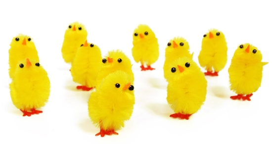 easter-chickens_14271343411